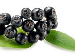 Концентрат ягод Черноплодной рябины (Арония) пищевой