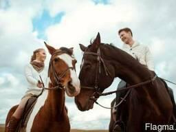 Конные прогулки для детей. Прокат лошадей
