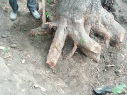 Корчевание Корчевка Удаление пней деревьев .