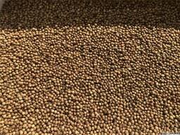 Кориандр семена 1я репродукция (посевной кориандр)