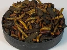 Корм натуральный для декоративных ежей Hedgie Mix#1 тм Буся 450мл/120г