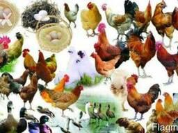 Кормовая ракушка для птицы