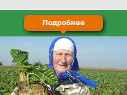 Кормовая свекла буряк семена Лада оригинал 100%