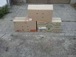 Коробки ящики для яиц для лотков