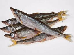 Корюшка 25+ (Дальневосточная) вяленая рыба