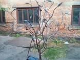 Кованое дерево с почтовым ящиком. - фото 6