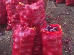 Красный лук - фото 2
