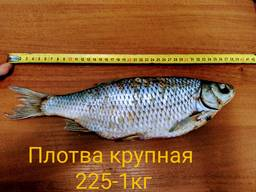 Вяленая рыбы плотва лещ и т. д.