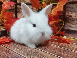 Кролик декоративный. Ручные малыши крольчата. Лучший питомец для деток и не только.