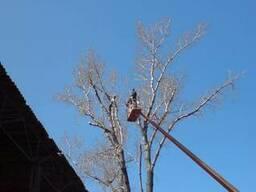 Кронирование деревьев Киев. Кронировка дерева. Спил дерева.
