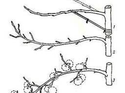 Кронирование, формировочная обрезка сада.