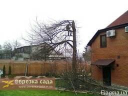 Кронирование, понижение деревьев Харьков
