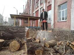 Кронировка деревьев. Кронирование дерева Киев.