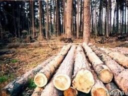 Куплю лес кругляк (сосна, тополь).