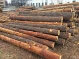 Продаю лес кругляк, свежепил, сухостой - фото 2