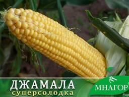 Кукурудза цукрова Джамала F1, 200 насінин, ТМ Мнагор