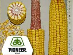Кукурудза Піонер ПР37Н01 посівний матеріал