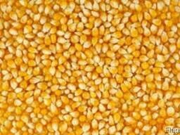 Кукуруза 1000 тн
