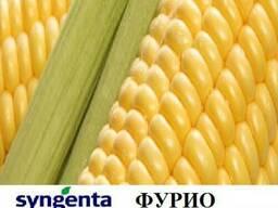 Кукуруза Фурио купить,Фурио цeна