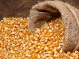 Кукуруза/ кондитерский подсолнух