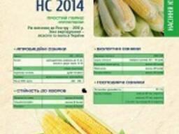Кукуруза НС-2014 Сербская селекция