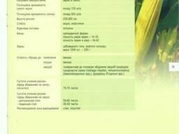 Кукуруза НС 2612 купить, семена кукурузы купить, нс 2612 цена