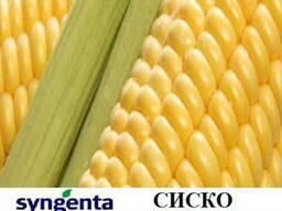 Кукуруза Сиско купить,Сиско кукуруза цeна