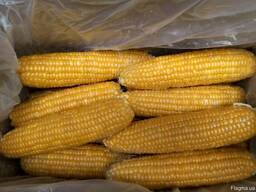 Кукуруза сладкая замороженная (початки) опт