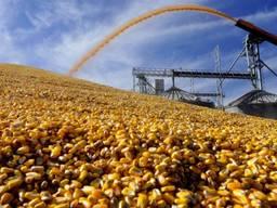 Кукуруза. Экспорт. Corn Export . Урожай 2021. Украина .