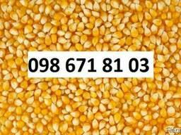 Куплю кукурузу Винница