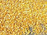 Шрот, жмых, жом, кукурузу, пшеницу на корма куплю . - фото 2