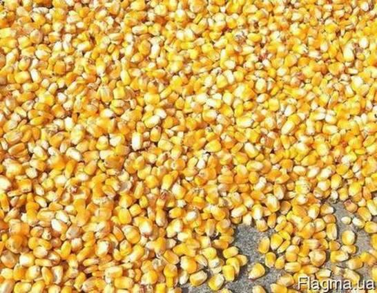 Кукурузу фуражную на экспорт, на условиях FOB