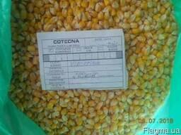 Купим 500 тонн кукурузы . Приемка Винница.