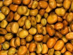 Купим бобы,коричневые,конские оптом