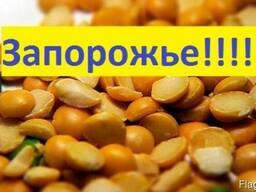 Куплю Горох Запорожье Украина