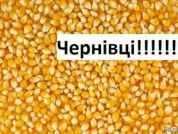 Куплю Кукурузу Черновцы Украина