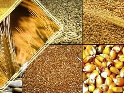 Купим кукурузу, пшеницу, гречку, сою, рапс, рожь, ячмень люб