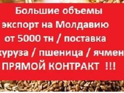 Купим на Молдову от 3000 т Пшеница, Ячмень, Кукуруза