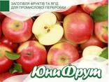 Купим яблоки и груши оптом