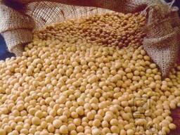 Купим зерно сои на экспорт.