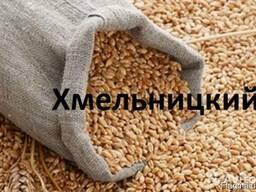 Куплю Пшеницу Хмельницкий Украина