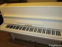 Купить пианино в Киеве. Продаем мы пианино - Petrof, Rosler,