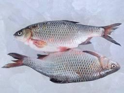 Купити рибу опт. Продаж річкової риби.