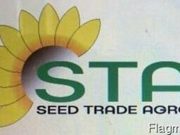 Купить семена подсолнуха под Евролайтин НС-Х-7637, НС-Х-7634