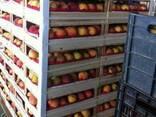 Купить ящики для персика в крыму от производителя - фото 2