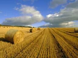 Куплю действующее сельхозпредприятие от 1000 Га