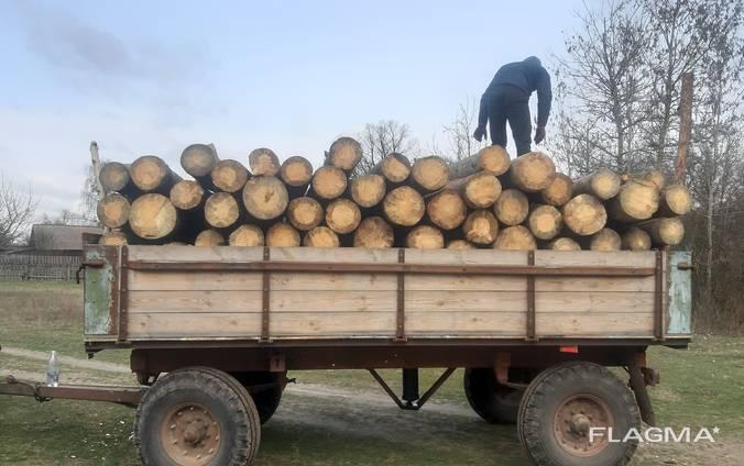 Куплю дрова сосна
