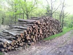 Куплю дрова твёрдых пород
