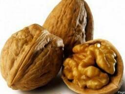 Куплю грецкие орехи!!!