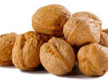 Куплю грецкий орех - цена договорная. - фото 1